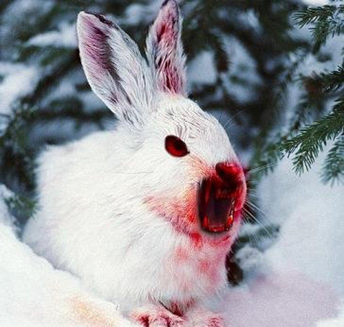 Жалоба-отзыв: Cалихова Юлия Шамилевна - Осторожно, злая собака.  Фото №1