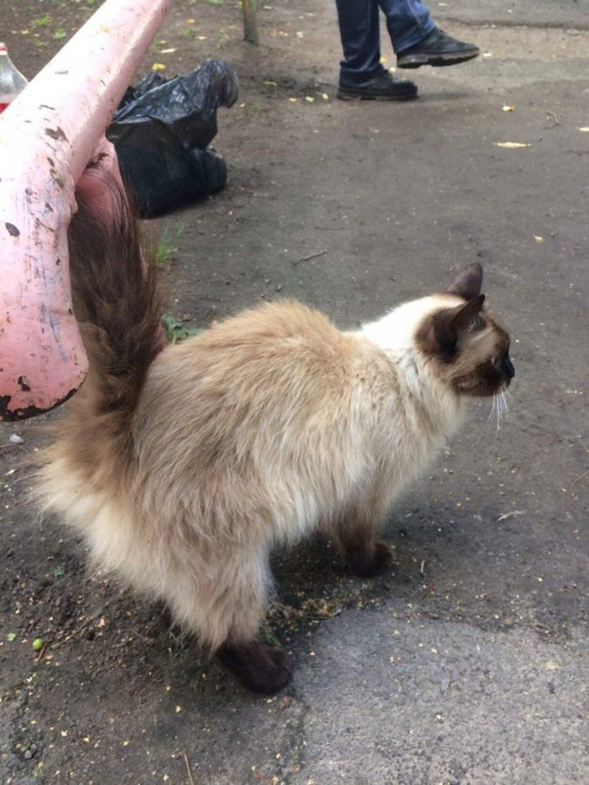 Жалоба-отзыв: Волонтеры-зоозащитники - Помогите спасти мою кошку из лап «волонтёров-зоозащитников»!