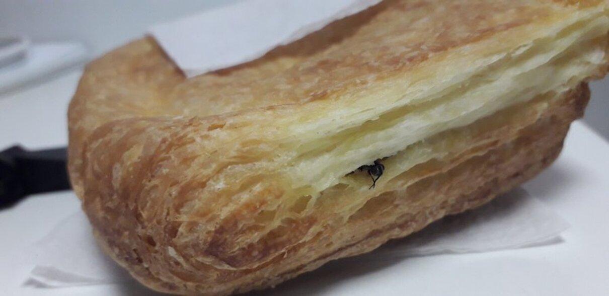 Жалоба-отзыв: Робин Сдобин - Купила фаготини с курицей и сыром, а оказалась она еще и с мухами!.  Фото №1