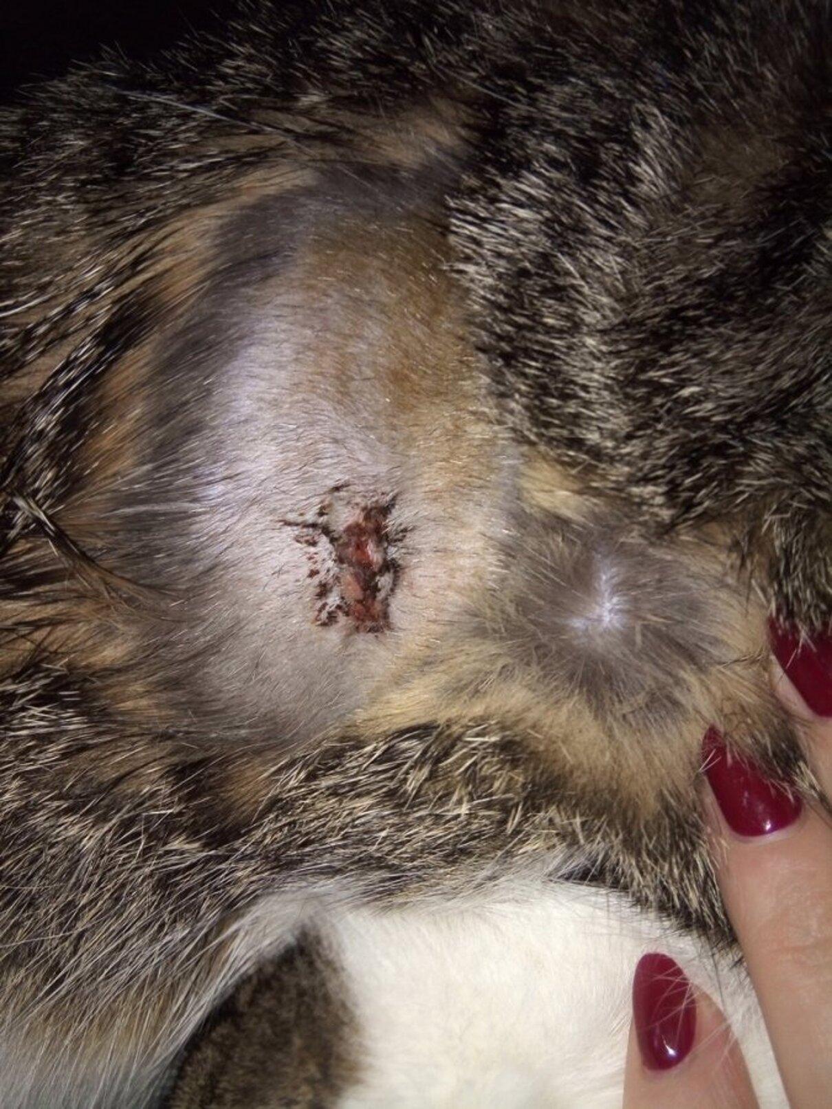 Жалоба-отзыв: Ветеринарная клиника ДРУГ Тамбов - Сделали не ту операцию и сказали, ничего страшного